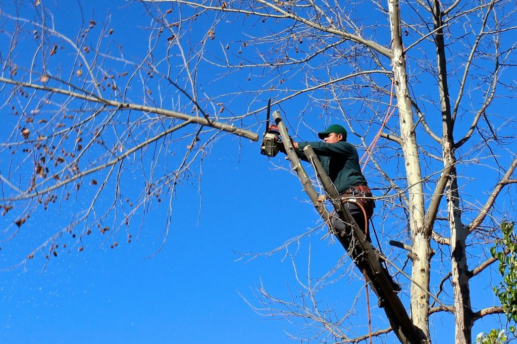 Contact Us-Wesley Chapel FL Tree Trimming and Stump Grinding Services-We Offer Tree Trimming Services, Tree Removal, Tree Pruning, Tree Cutting, Residential and Commercial Tree Trimming Services, Storm Damage, Emergency Tree Removal, Land Clearing, Tree Companies, Tree Care Service, Stump Grinding, and we're the Best Tree Trimming Company Near You Guaranteed!