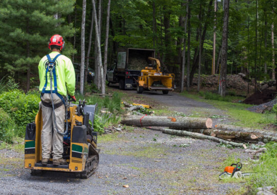 Emergency Tree Removal-Wesley Chapel FL Tree Trimming and Stump Grinding Services-We Offer Tree Trimming Services, Tree Removal, Tree Pruning, Tree Cutting, Residential and Commercial Tree Trimming Services, Storm Damage, Emergency Tree Removal, Land Clearing, Tree Companies, Tree Care Service, Stump Grinding, and we're the Best Tree Trimming Company Near You Guaranteed!