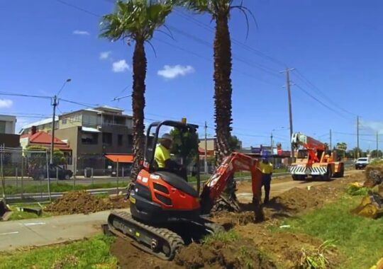 Palm Tree Removal-Wesley Chapel FL Tree Trimming and Stump Grinding Services-We Offer Tree Trimming Services, Tree Removal, Tree Pruning, Tree Cutting, Residential and Commercial Tree Trimming Services, Storm Damage, Emergency Tree Removal, Land Clearing, Tree Companies, Tree Care Service, Stump Grinding, and we're the Best Tree Trimming Company Near You Guaranteed!