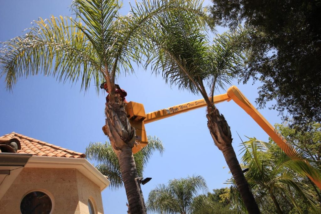 Palm Tree Trimming-Wesley Chapel FL Tree Trimming and Stump Grinding Services-We Offer Tree Trimming Services, Tree Removal, Tree Pruning, Tree Cutting, Residential and Commercial Tree Trimming Services, Storm Damage, Emergency Tree Removal, Land Clearing, Tree Companies, Tree Care Service, Stump Grinding, and we're the Best Tree Trimming Company Near You Guaranteed!