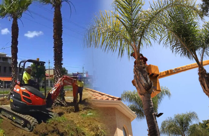 Palm tree trimming & palm tree removal-Wesley Chapel FL Tree Trimming and Stump Grinding Services-We Offer Tree Trimming Services, Tree Removal, Tree Pruning, Tree Cutting, Residential and Commercial Tree Trimming Services, Storm Damage, Emergency Tree Removal, Land Clearing, Tree Companies, Tree Care Service, Stump Grinding, and we're the Best Tree Trimming Company Near You Guaranteed!