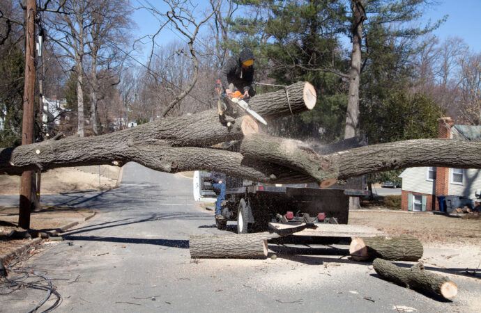 Residential Tree Services-Wesley Chapel FL Tree Trimming and Stump Grinding Services-We Offer Tree Trimming Services, Tree Removal, Tree Pruning, Tree Cutting, Residential and Commercial Tree Trimming Services, Storm Damage, Emergency Tree Removal, Land Clearing, Tree Companies, Tree Care Service, Stump Grinding, and we're the Best Tree Trimming Company Near You Guaranteed!