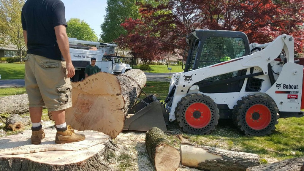 Services-Wesley Chapel FL Tree Trimming and Stump Grinding Services-We Offer Tree Trimming Services, Tree Removal, Tree Pruning, Tree Cutting, Residential and Commercial Tree Trimming Services, Storm Damage, Emergency Tree Removal, Land Clearing, Tree Companies, Tree Care Service, Stump Grinding, and we're the Best Tree Trimming Company Near You Guaranteed!
