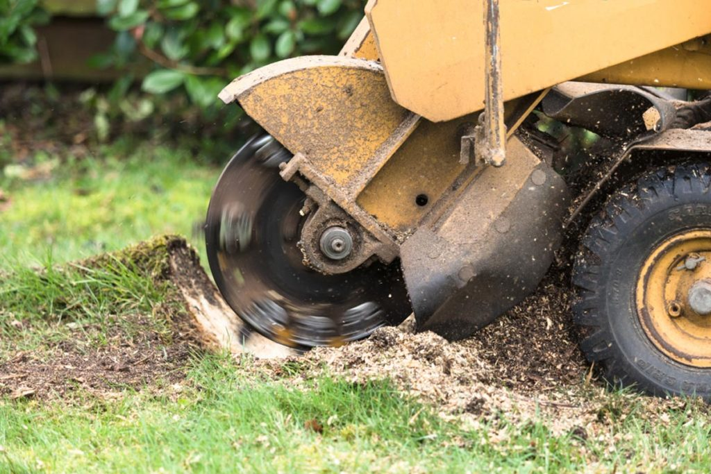 Stump Grinding-Wesley Chapel FL Tree Trimming and Stump Grinding Services-We Offer Tree Trimming Services, Tree Removal, Tree Pruning, Tree Cutting, Residential and Commercial Tree Trimming Services, Storm Damage, Emergency Tree Removal, Land Clearing, Tree Companies, Tree Care Service, Stump Grinding, and we're the Best Tree Trimming Company Near You Guaranteed!