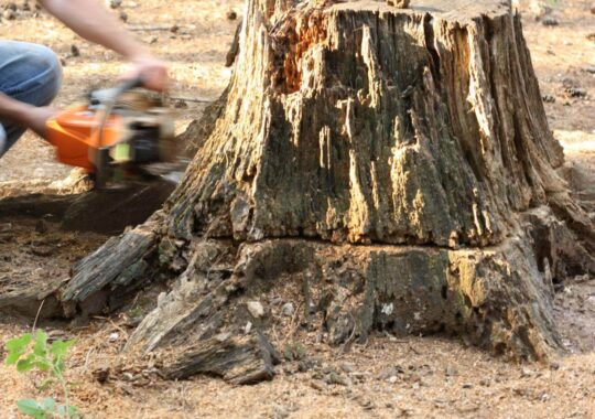 Stump Removal-Wesley Chapel FL Tree Trimming and Stump Grinding Services-We Offer Tree Trimming Services, Tree Removal, Tree Pruning, Tree Cutting, Residential and Commercial Tree Trimming Services, Storm Damage, Emergency Tree Removal, Land Clearing, Tree Companies, Tree Care Service, Stump Grinding, and we're the Best Tree Trimming Company Near You Guaranteed!