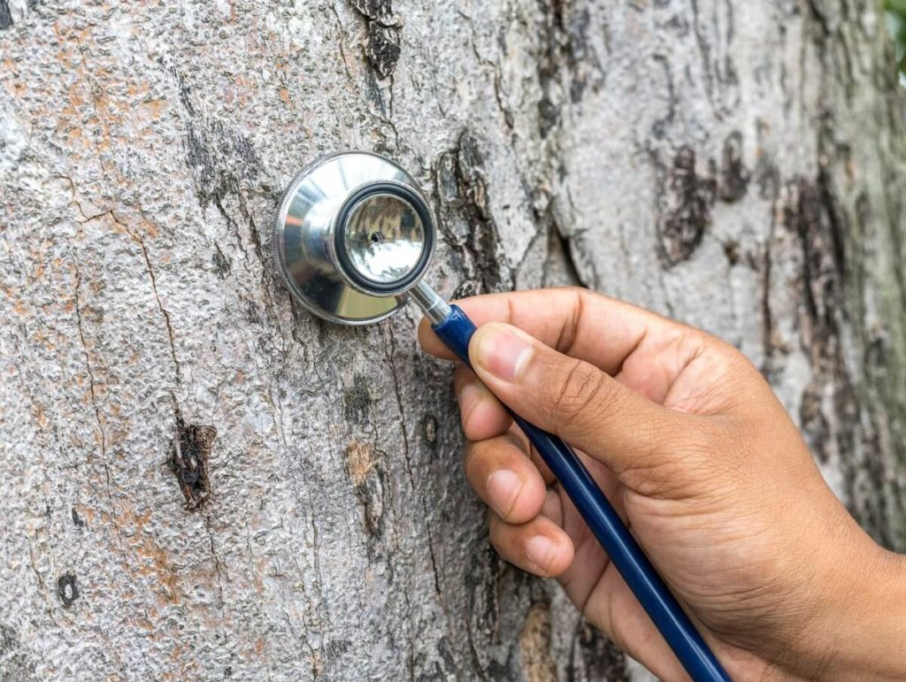 Tree Assessments-Wesley Chapel FL Tree Trimming and Stump Grinding Services-We Offer Tree Trimming Services, Tree Removal, Tree Pruning, Tree Cutting, Residential and Commercial Tree Trimming Services, Storm Damage, Emergency Tree Removal, Land Clearing, Tree Companies, Tree Care Service, Stump Grinding, and we're the Best Tree Trimming Company Near You Guaranteed!