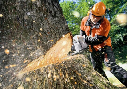Tree Cutting-Wesley Chapel FL Tree Trimming and Stump Grinding Services-We Offer Tree Trimming Services, Tree Removal, Tree Pruning, Tree Cutting, Residential and Commercial Tree Trimming Services, Storm Damage, Emergency Tree Removal, Land Clearing, Tree Companies, Tree Care Service, Stump Grinding, and we're the Best Tree Trimming Company Near You Guaranteed!