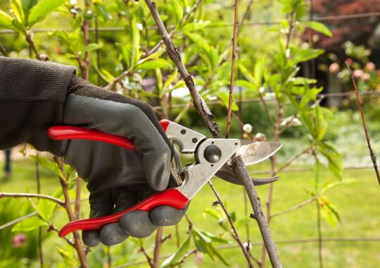 Tree Pruning-Wesley Chapel FL Tree Trimming and Stump Grinding Services-We Offer Tree Trimming Services, Tree Removal, Tree Pruning, Tree Cutting, Residential and Commercial Tree Trimming Services, Storm Damage, Emergency Tree Removal, Land Clearing, Tree Companies, Tree Care Service, Stump Grinding, and we're the Best Tree Trimming Company Near You Guaranteed!