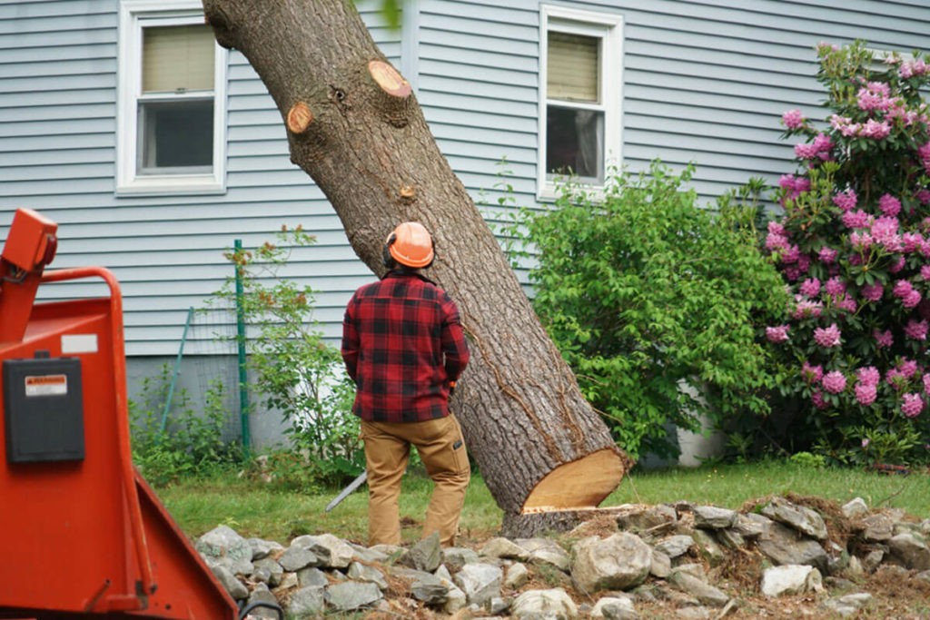 Tree Removal-Wesley Chapel FL Tree Trimming and Stump Grinding Services-We Offer Tree Trimming Services, Tree Removal, Tree Pruning, Tree Cutting, Residential and Commercial Tree Trimming Services, Storm Damage, Emergency Tree Removal, Land Clearing, Tree Companies, Tree Care Service, Stump Grinding, and we're the Best Tree Trimming Company Near You Guaranteed!
