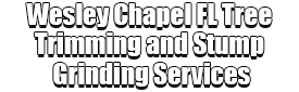 Wesley Chapel FL Tree Trimming and Stump Grinding Services Logo-We Offer Tree Trimming Services, Tree Removal, Tree Pruning, Tree Cutting, Residential and Commercial Tree Trimming Services, Storm Damage, Emergency Tree Removal, Land Clearing, Tree Companies, Tree Care Service, Stump Grinding, and we're the Best Tree Trimming Company Near You Guaranteed!